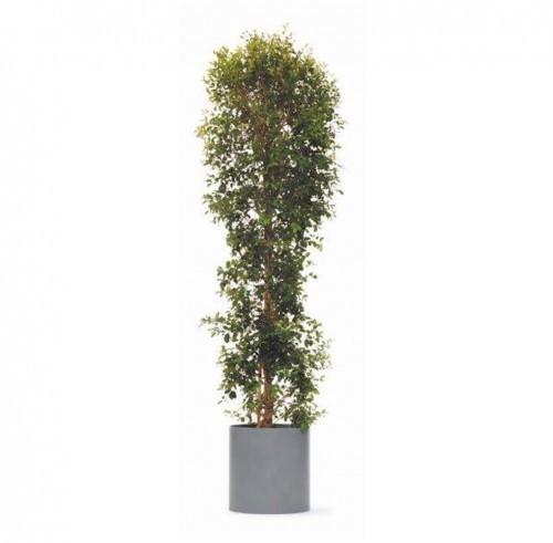 Pflanzen für Büro und Events mieten Föhr